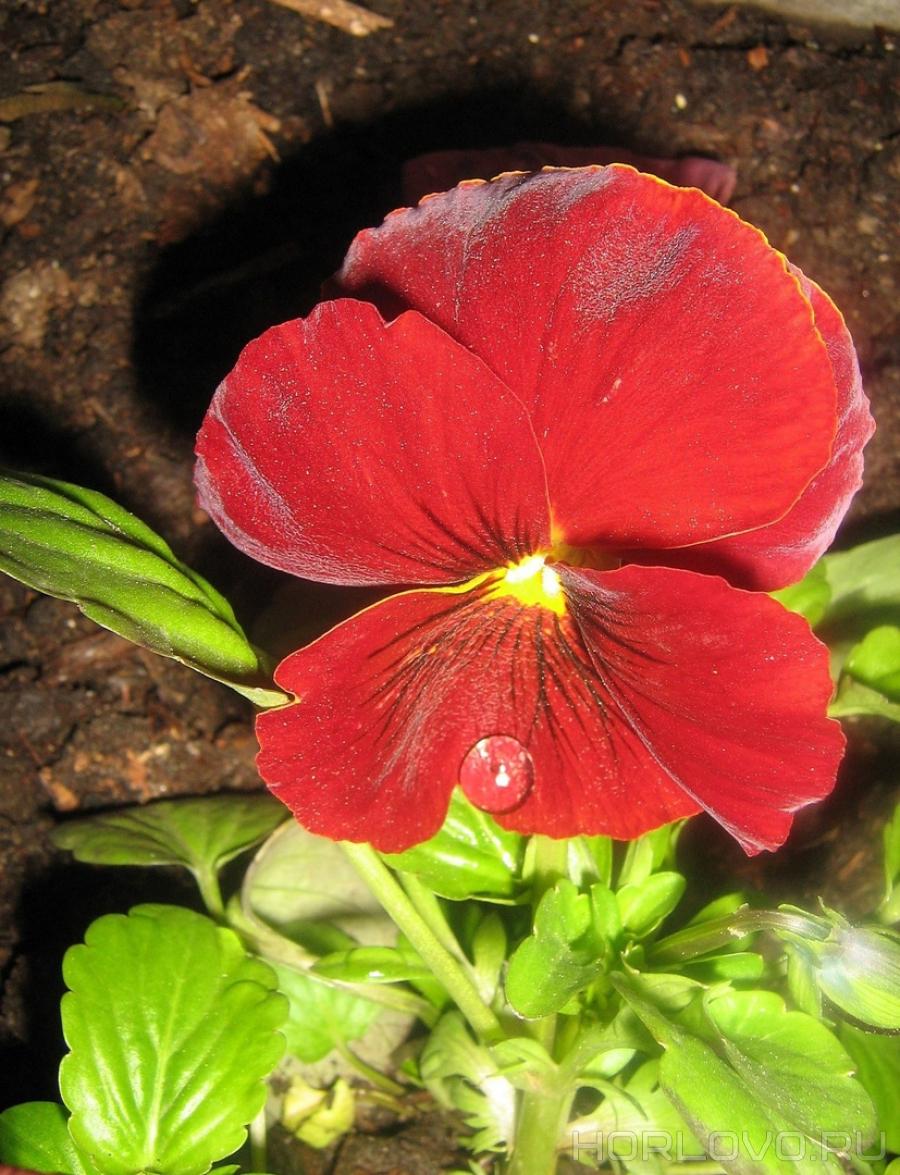 «Поэзия в цветах» Ольги Новиковой
